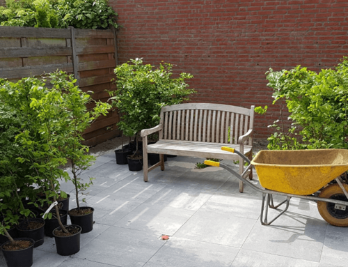 Inplanten patio tuin | Rhoon