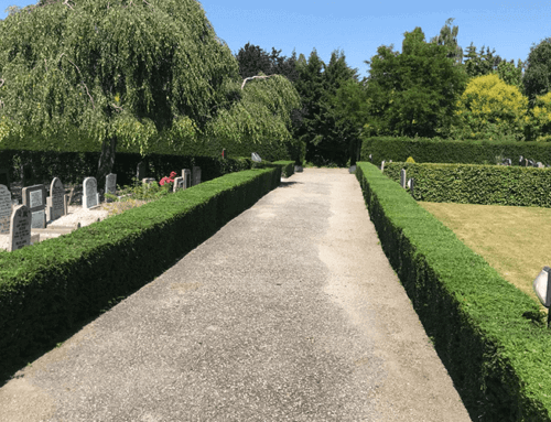 Vormsnoeiwerk op begraafplaats | Heerjansdam