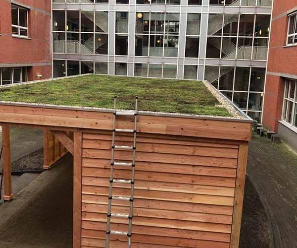 groen sedum dak